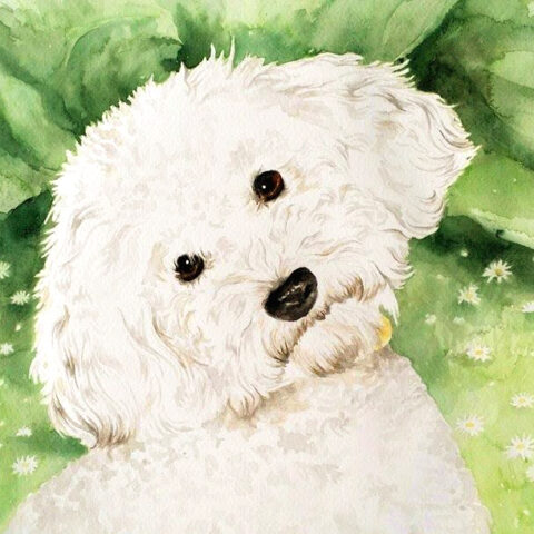aquarelle portrait dog
