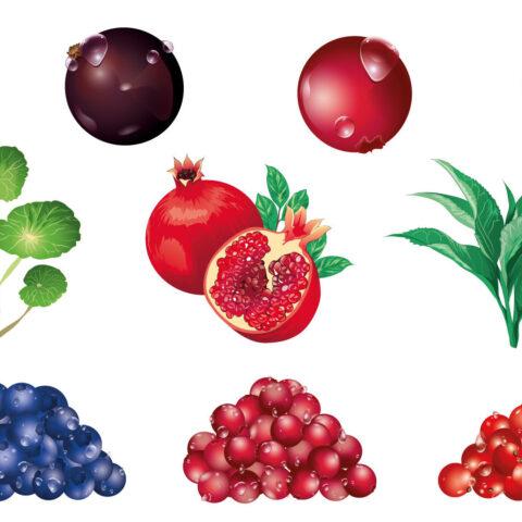 Vector illustration berries