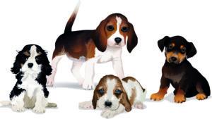 Adaptions made for Stardoll.com - Dogs